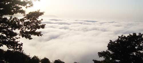 هشت کیلومتر تا نابودی جنگل ابر